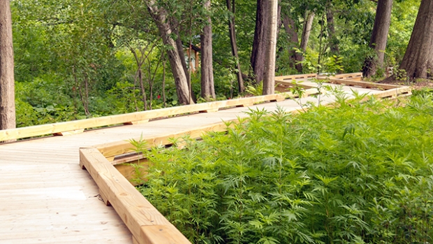 Photo of restoration ecology boardwalk