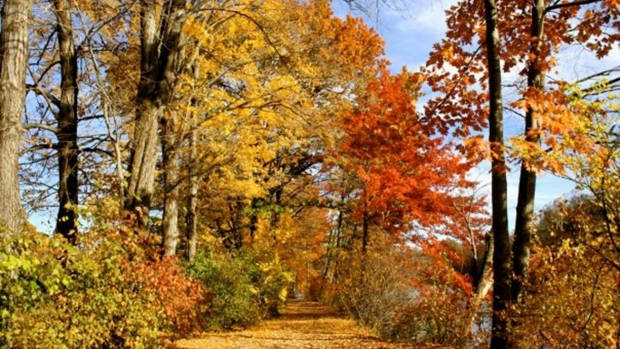 Upper lake path with changing color leaves on trees