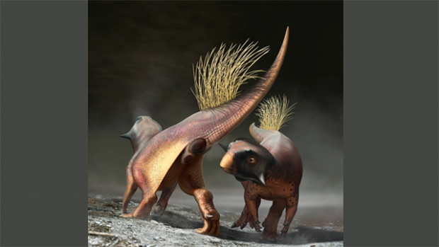 This is an artist's rendering of two dinosaur's circling one another; the cloaca of one is clearly visible.
