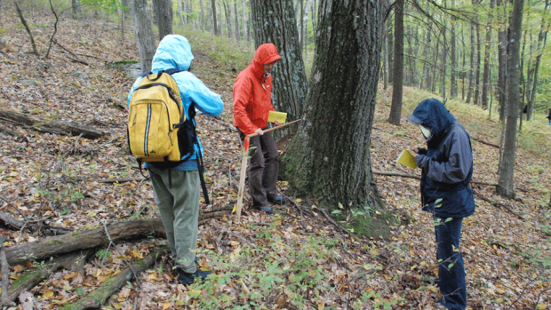 Photo of students taking part in forest monitoring