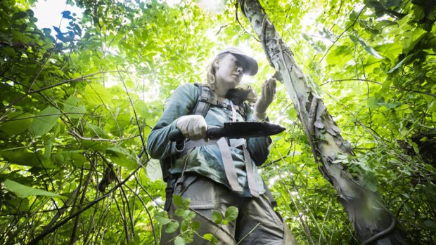 Photo of a student conducting forest research