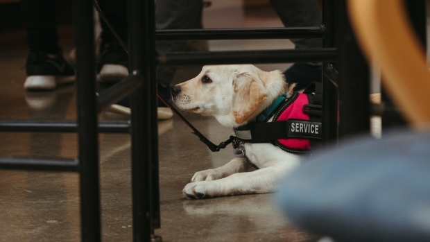 A service dog at a Mount Holyoke College event