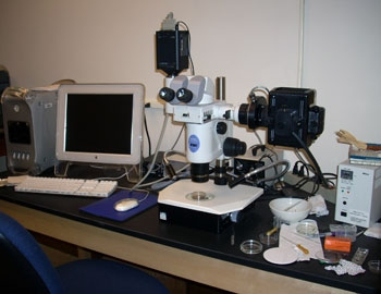 Nikon SMZ stereo microscope with fluorescence illuminator