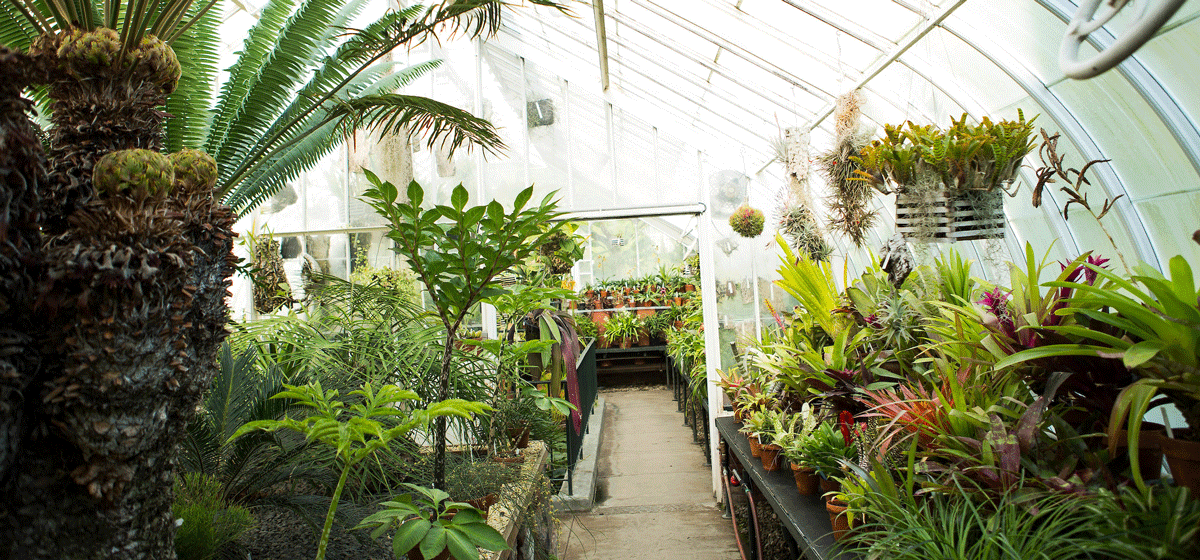 Photo of the interior of the Talcott Greenhouse