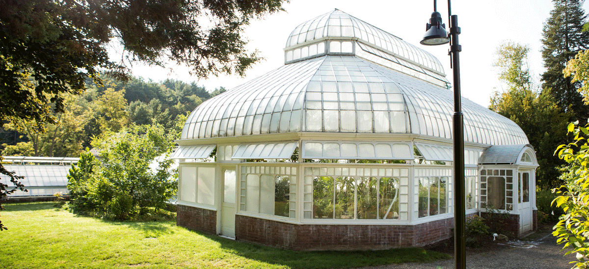 Photo of the Talcott greenhouse conservatory