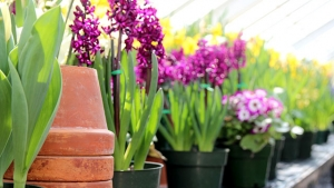 Image of terracotta pots at Talcott Greenhouse.