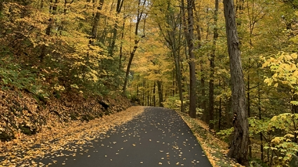 A view of the road up Mt. Holyoke, with scattered brightly colored leaves