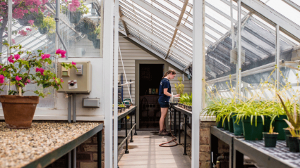 Photo of a student working in the greenhouse
