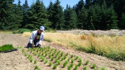 Photo of Theo Claire '20 working with plants during an internship with the Elwha River Restoration Project on the Olympic Peninsula, in Washington