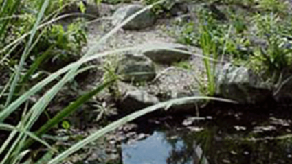 Photo of the small pond in the Drue Matthews Garden