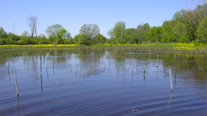 Photo of a restored wetland