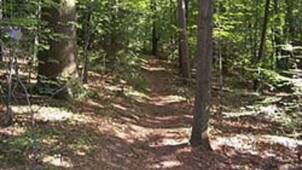 Photo of a trail on Prospect Hill
